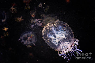 Photograph - Tiny Jellyfish by Adria Trail