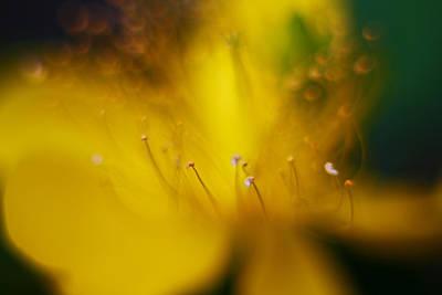Photograph - Tiny Machine 7 by Afrison Ma