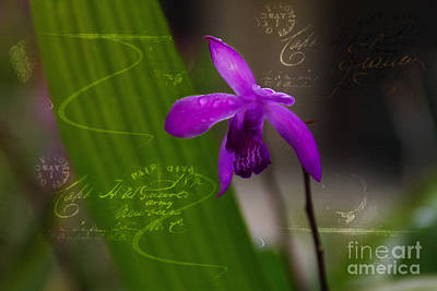 Digital Art - Tiny Orchid by Lisa Redfern