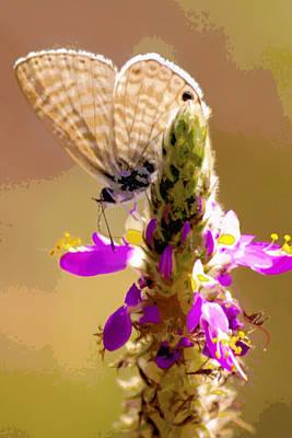 Tiny Pale Butterfly Original