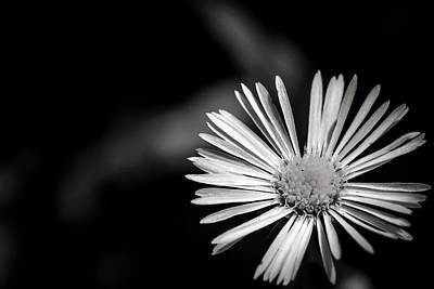 Photograph - Tiny Petals Black And White by Sennie Pierson
