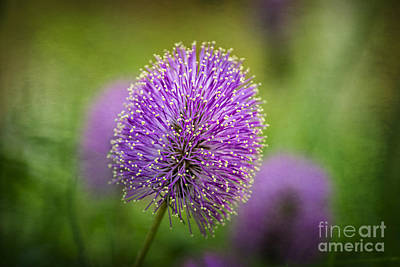 Photograph - Tiny Purple Wildflower by Tamyra Ayles