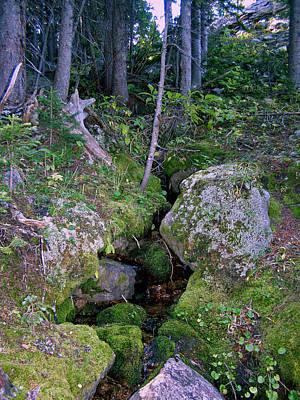 Photograph - Tiny Real Mossy Creek by Thomas Samida