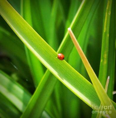 Photograph - Tiny Red Ladybug In A Sea Of Green by Chalet Roome-Rigdon