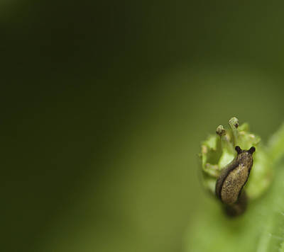 Photograph - Tiny Slug by Sarah Crites
