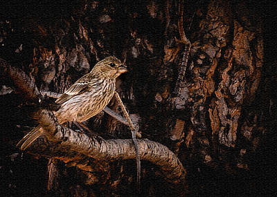 Photograph - Tiny Sparrow Huge Tree by Bob and Nadine Johnston