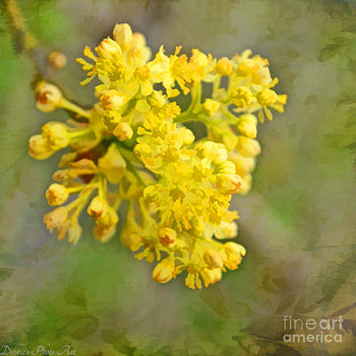 Photograph - Tiny Spring Tree Blooms - Digital Paint by Debbie Portwood
