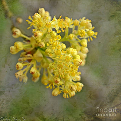 Photograph - Tiny Spring Tree Blooms by Debbie Portwood