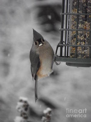 Photograph - Tiny Titmouse by Michelle Welles