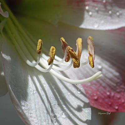 Bulb Photograph - Tiny Treasures Squared by Suzanne Gaff
