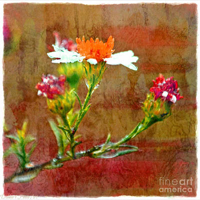 Photograph - Tiny Wildflowers - Digital Paint Iv by Debbie Portwood