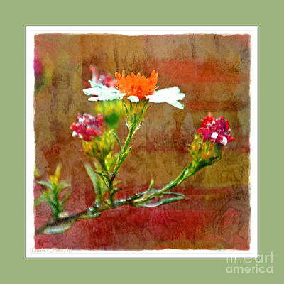 Photograph - Tiny Wildflowers - Digital Paint Iv Green Frame by Debbie Portwood