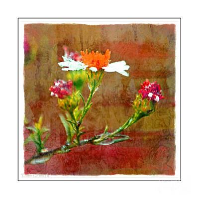 Photograph - Tiny Wildflowers - Digital Paint Iv White Frame by Debbie Portwood