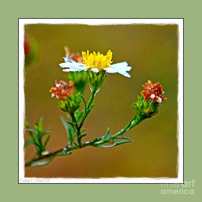 Photograph - Tiny Wildflowers 1 - Green Frame by Debbie Portwood