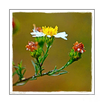 Photograph - Tiny Wildflowers 1 - White Frame by Debbie Portwood