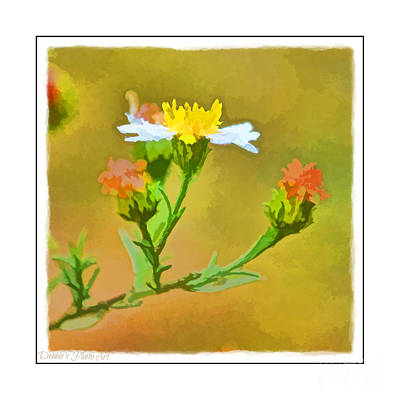Photograph - Tiny Wildflowers-digital Paint I - White Frame by Debbie Portwood
