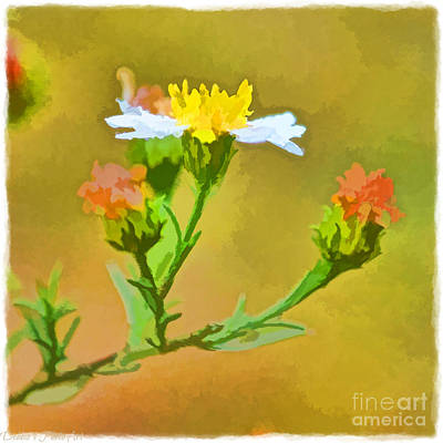 Photograph - Tiny Wildflowers-digital Paint I by Debbie Portwood