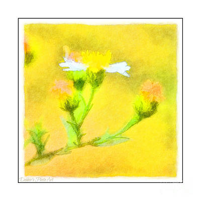 Photograph - Tiny Wildflowers-digital Paint II - White Frame by Debbie Portwood