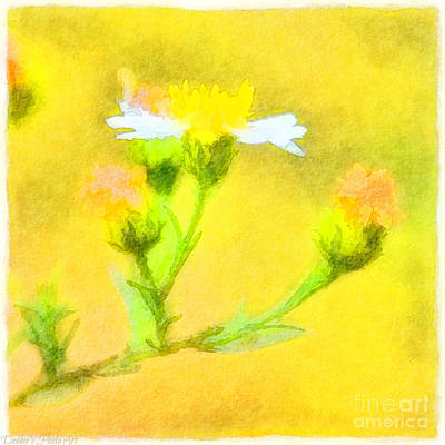 Photograph - Tiny Wildflowers-digital Paint II by Debbie Portwood