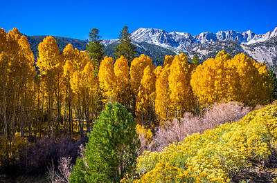 Sierra Nevada Fall Colors Photograph - Tioga Pass by Scott McGuire