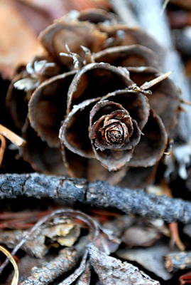 Photograph - Tip Of The Pine Cone by Amee Cave
