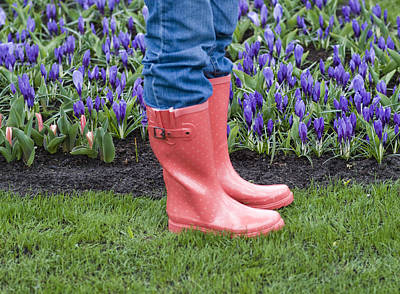 Photograph - Tip Toe Through The Tulips by Juli Scalzi
