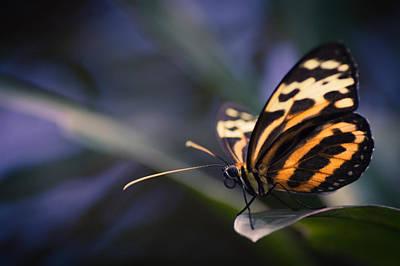 Photograph - Tip Toe Tiger by Jen Baptist
