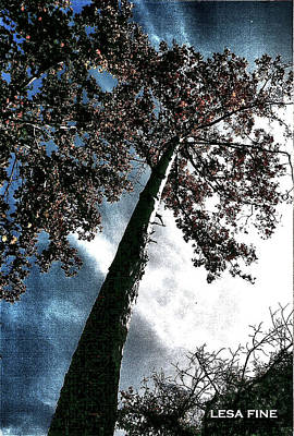 Photograph - Tippy Top Tree II Art by Lesa Fine