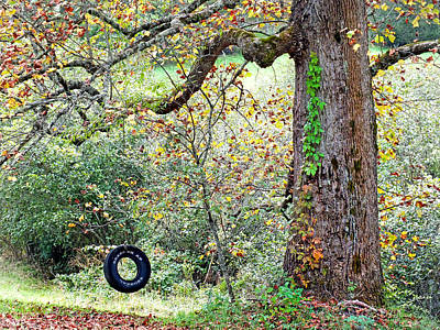 Photograph - Tire Swing And Poplar Tree 2 by Duane McCullough