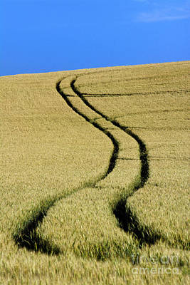 Tire Tracks In A Wheat Field. Auvergne. France. Print by Bernard Jaubert