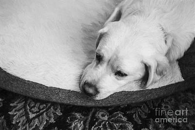 Tired Pup Print by Diane Diederich
