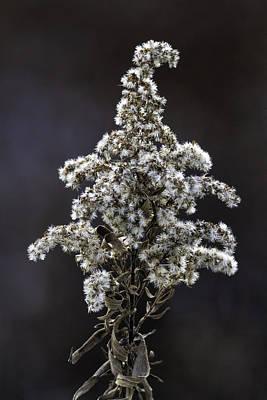 Jolly Old Saint Nick - Tis The Season  8244  by Karen Celella