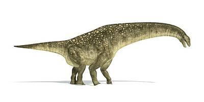 Prehistorical Photograph - Titanosaurus Dinosaur by Leonello Calvetti