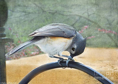 Tufted Titmouse Photograph - Titmouse At Work by Debbie Portwood