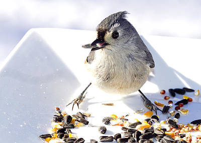 Photograph - Titmouse Bird Feeding by Trudy Wilkerson