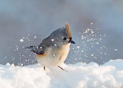 Tufted Titmouse Photograph - Titmouse Fun In The Snow by Jack Nevitt