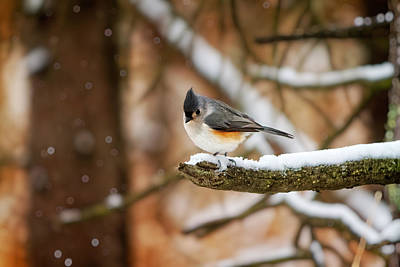 Photograph - Titmouse In Winter by Lars Lentz