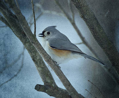 Photograph - Titmouse by Sandy Keeton