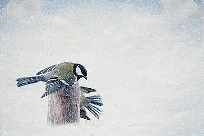 Winter Fun Mixed Media - Tits by Heike Hultsch