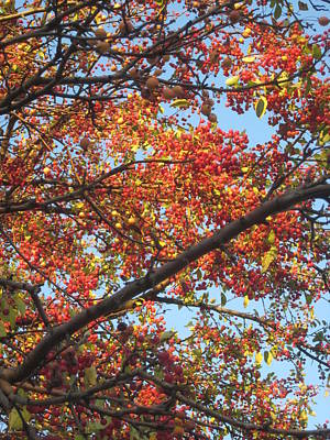 Photograph - To Autumn by Guy Ricketts