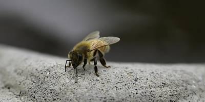 Photograph - To Bee Concrete -16 by Rae Ann  M Garrett
