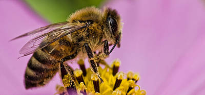Photograph - To Bee by Don Schwartz