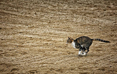 Photograph - To Catch A Mouse by Karol Livote