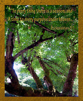 Photograph - To Every Tree There Is A Season by Michele Avanti