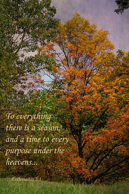 Photograph - To Everything There Is A Season by Deena Stoddard