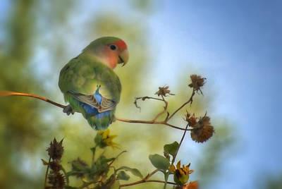 Lovebird Wall Art - Photograph - To Love A Lovebird by Saija  Lehtonen