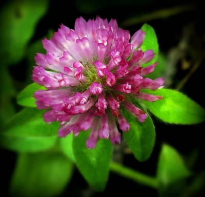 Flowers Shop Photograph - To Remember Clover by Karen Wiles