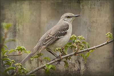 Mockingbird Digital Art - To Still A Mockingbird by Kathy Clark