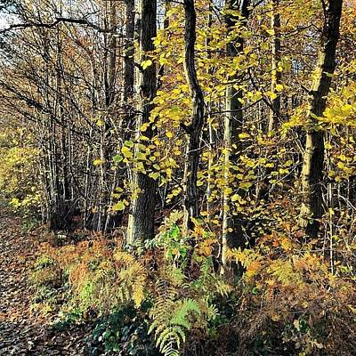 Forest Wall Art - Photograph - To The Woods by Nic Squirrell