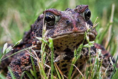 Photograph - Toad Close Up by Lawrence Burry
